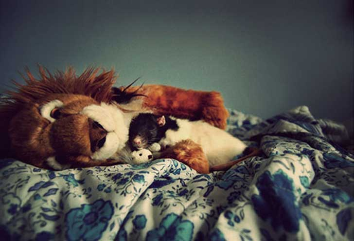 bed-stuffed-animals-JF