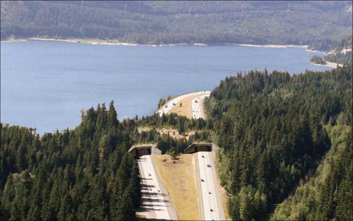 near-keechelus-lake-washington-usa-animal-bridge-wildlife-crossing-overpass