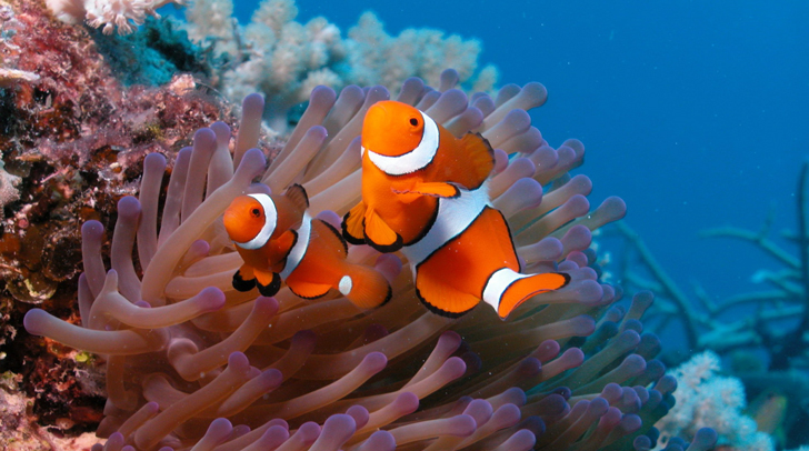 Coral-Reef-HD-Wallpapers
