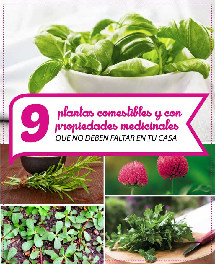 144 planta ornamental y comestible de chile tips de