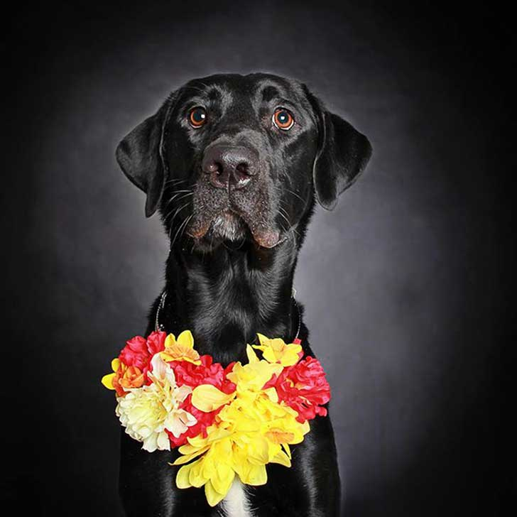 black-dog-portraits-floral-crown-guinnevere-shuster-1