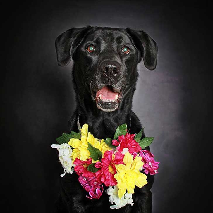 black-dog-portraits-floral-crown-guinnevere-shuster-5