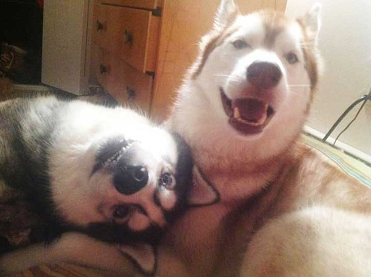 dog-best-friends-4__605