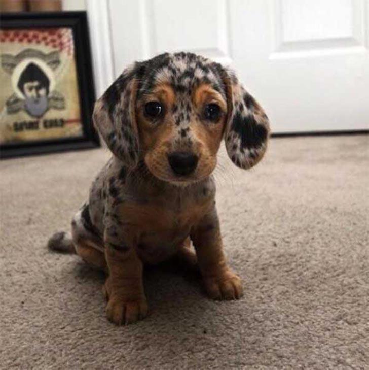 dog-coat-markings-10