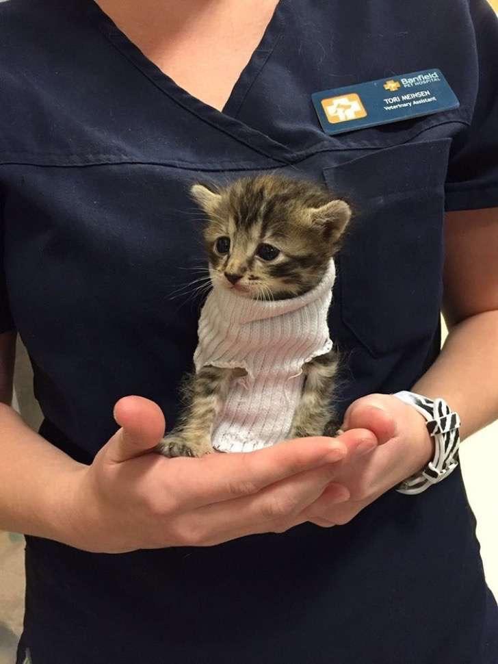 kitten-tube-sock-sweater-hurricane-matthew-9-2
