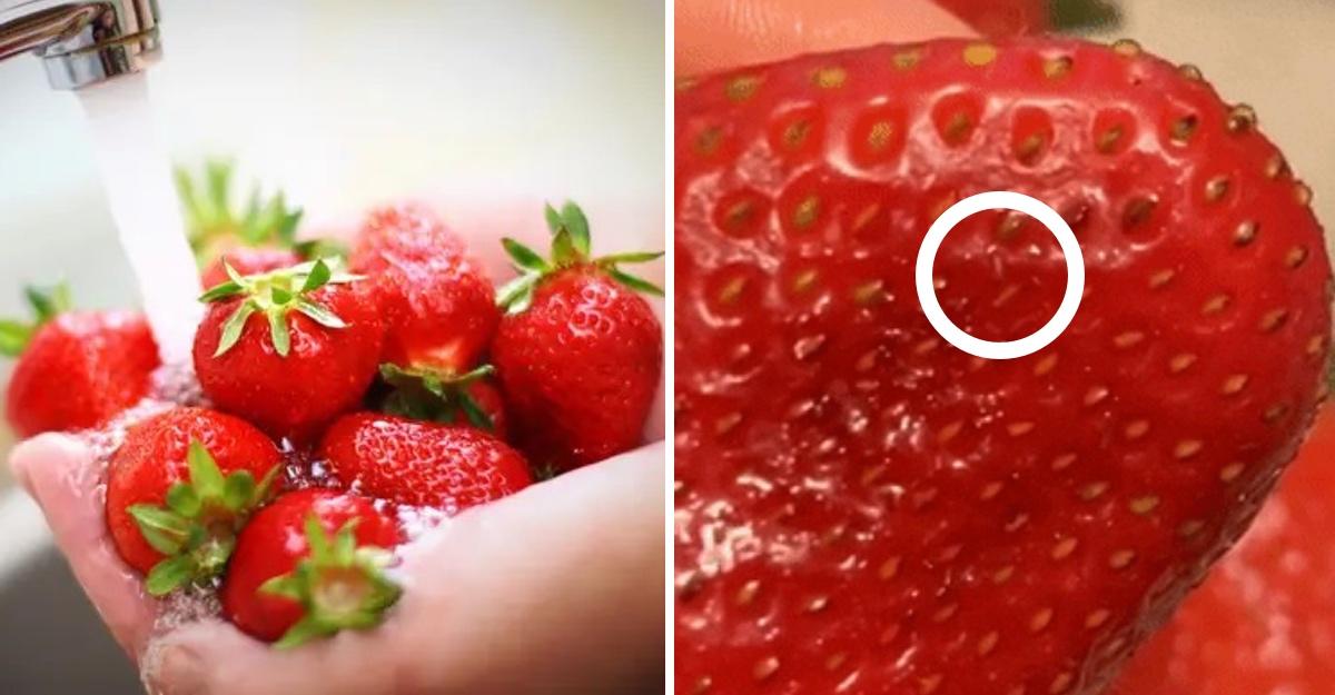 Si sumerges las fresas en agua con sal, les saldrán pequeños ...